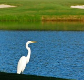 Dataw Island - Golf Communities in South Carolina