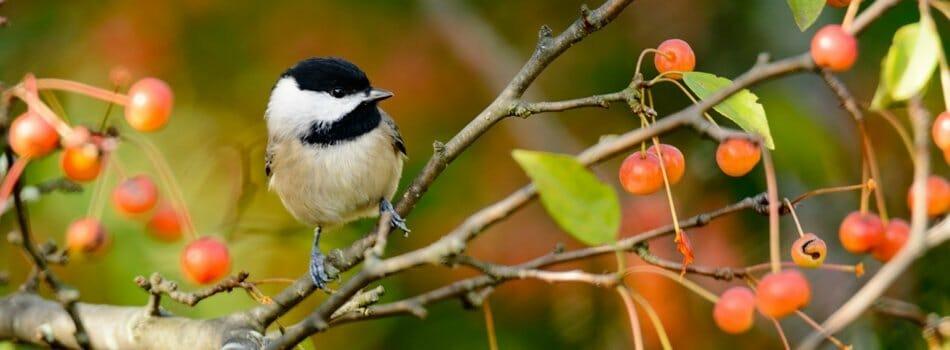 Audubon Certified Communities   Audubon Certification   Bird Paradise